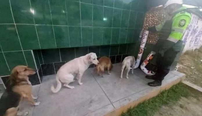 Comedouro para cães