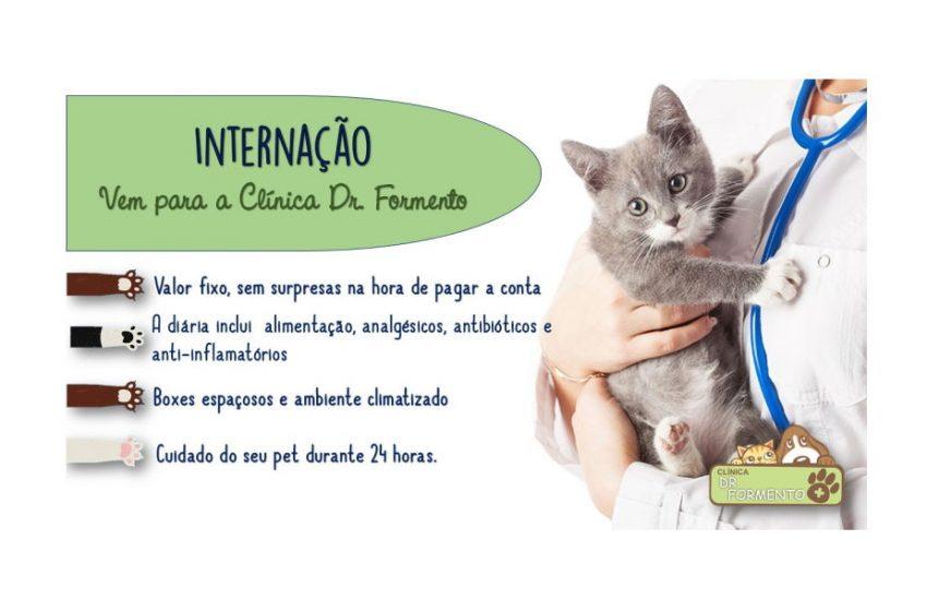 internação veterinária Dr. Formento